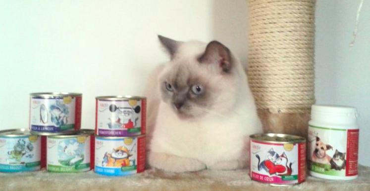 zuckerfreies katzenfutter